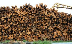 drewno tartak